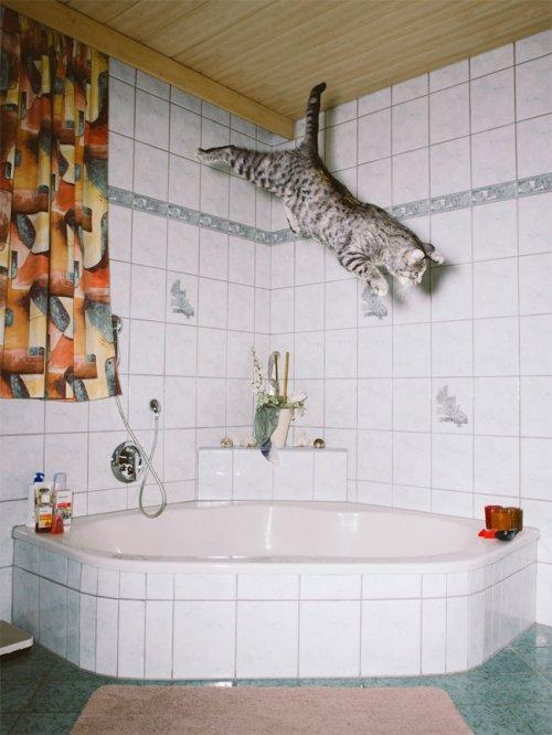 """""""Летающие"""" кошки фотографа Даниэля Гебхарта Кёккёк (13 фото)"""