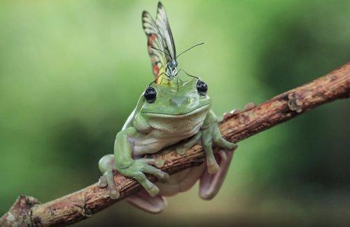 Фотографии лягушек, какими вы их ещё не видели (35 фото)