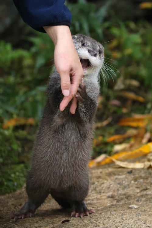 Радостная выдра, держащаяся за руку человека, и фотожабы на неё (15 шт)