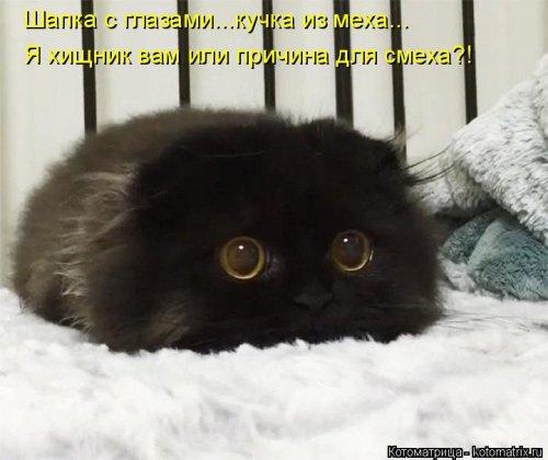 Свежая котоматрица для настроения (32 фото)