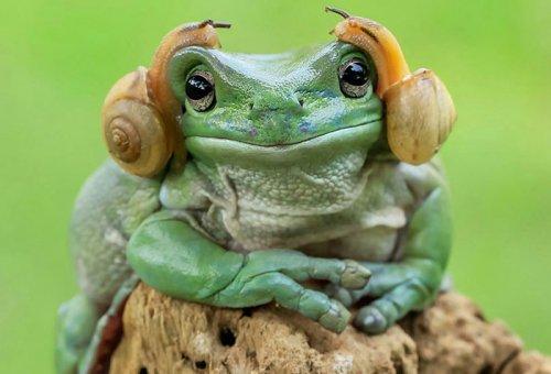 Лягушка, похожая на принцессу Лею, и фотожабы на неё (18 фото)
