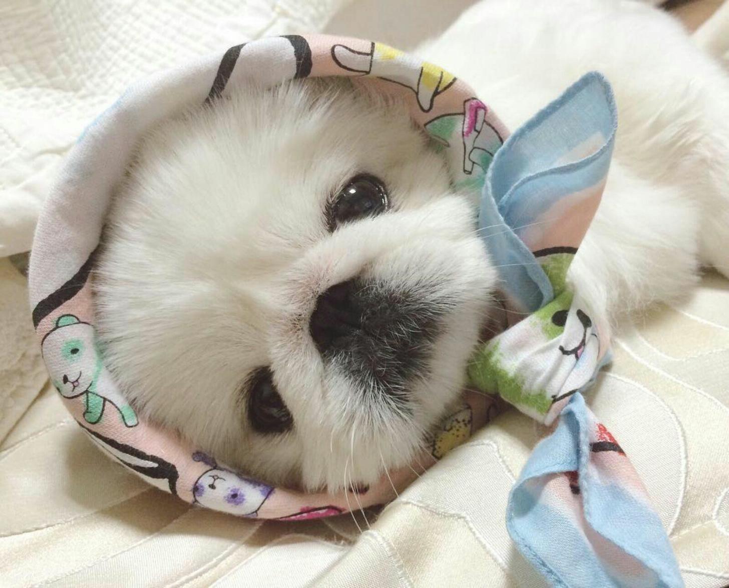 Картинки с самыми милыми животными в мире киста возникает