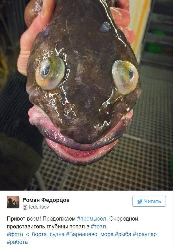 курорт роман федорцов фото рыб состоит лишь