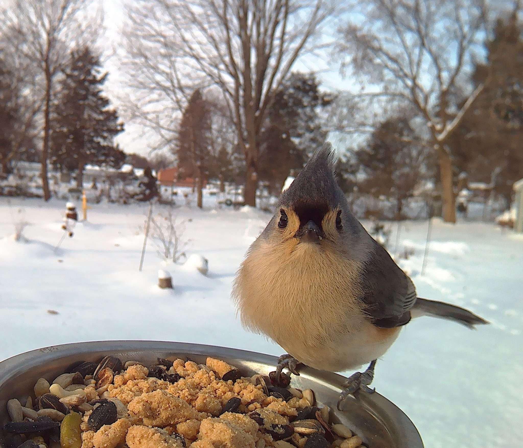 коржи покормить птицу картинка мальчику было