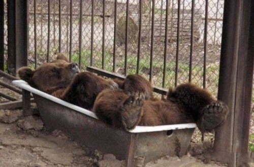 Фотографии с животными для поднятия настроения (22 фото)
