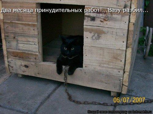 Новая котоматрица на Бугаге (35 фото)