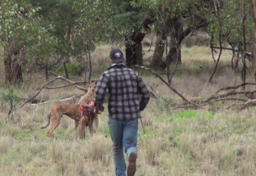 Парень ударил кенгуру кулаком в морду, чтобы спасти свою собаку