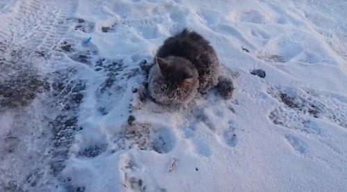 Семейная пара спасла вмёрзшего в землю котика и нашла ему новую хозяйку (фото + 2 видео)