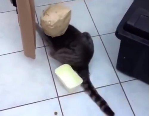 Кошки, пойманные в ловушку любопытства