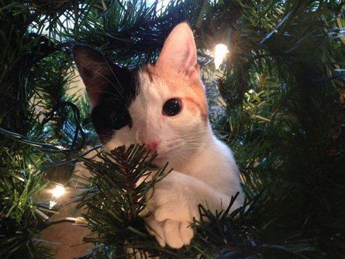 Кто больше всех рад новогодней ёлке? (22 фото)