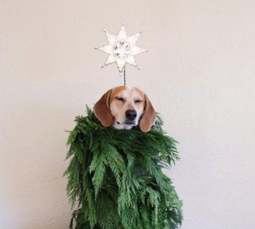Собаки, переодетые в новогодние ёлки (10 фото)