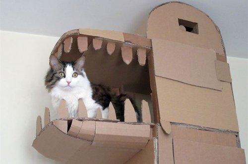 Парень построил для своей кошки картонную башню в виде дракона (5 фото + видео)