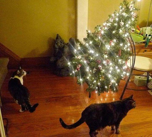 Разрушители новогоднего настроения (10 фото)