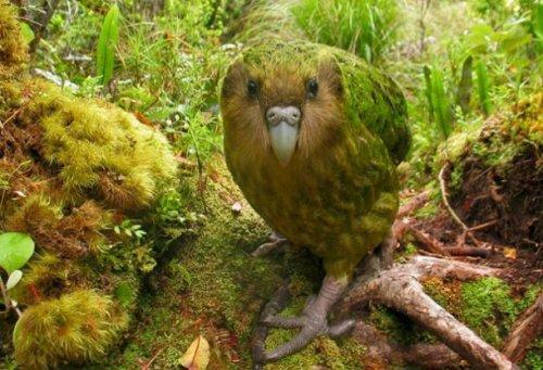 Топ-25: Исчезающие виды животных, которых мы можем потерять в этом столетии