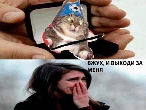 """Популярный Интернет-мем: кот-волшебник """"Вжух"""" (10 фото)"""