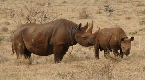 Top 25: Animales extintos que no volveremos a ver