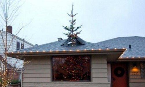 Топ-10: Удивительные факты про рождественские ёлки, которые вы должны знать