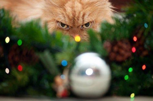 Домашние животные, которые ненавидят Рождество больше всего на свете (32 фото)