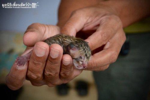 Необычный котёнок найден на улице Таиланда (10 фото)