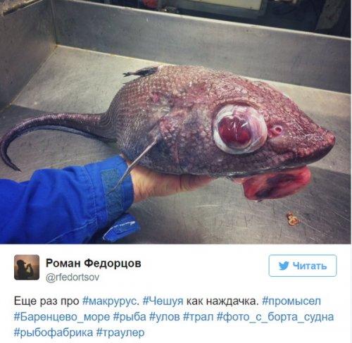 Познавательный твиттер моряка Романа Федорцова (16 фото)