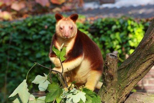 Топ-10: Поразительные виды животных на грани исчезновения, о которых вы никогда не слышали