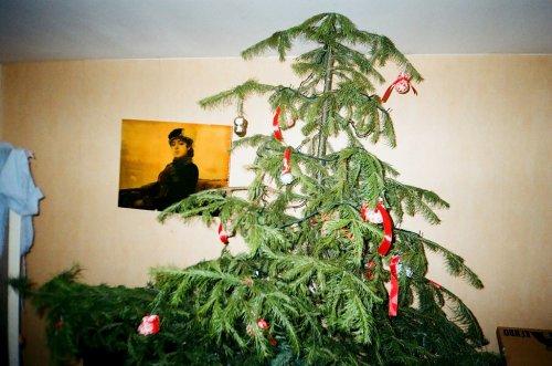 Самые странные и уродливые новогодние ёлки (15 фото)