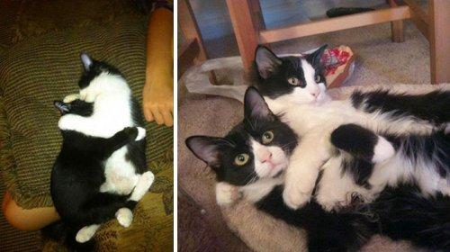 """Очаровательные фотографии """"до и после"""" с животными, выросшими вместе (33 шт)"""