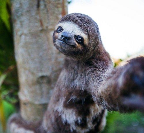Животные, которые любят селфи (23 фото)