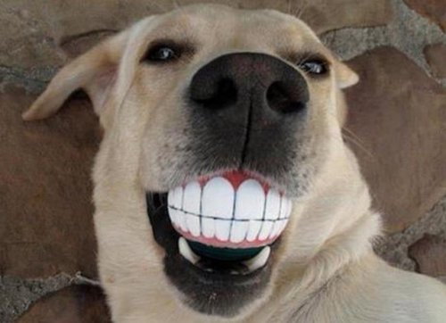 Топ-10: Лучшие способы поддерживать здоровье своей собаки