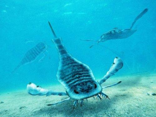 Amazoncom Scorpion in the Sea 9780312951795 P T