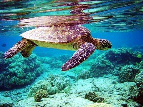 Топ-25: Интересные факты про Большой Барьерный риф, о которых вы захотите услышать