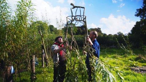 Английский фермер выращивает мебель (фото + видео)