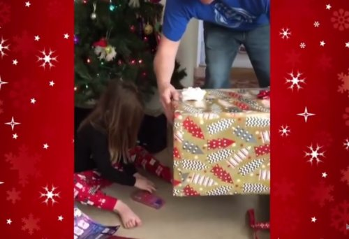 Рождественский подарок, превратившийся в очаровательный кошачий розыгрыш