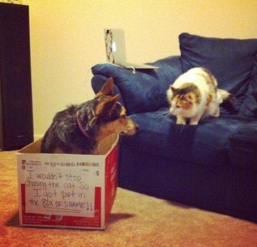 Собаки, которые тоже обожают сидеть в коробках (10 фото)