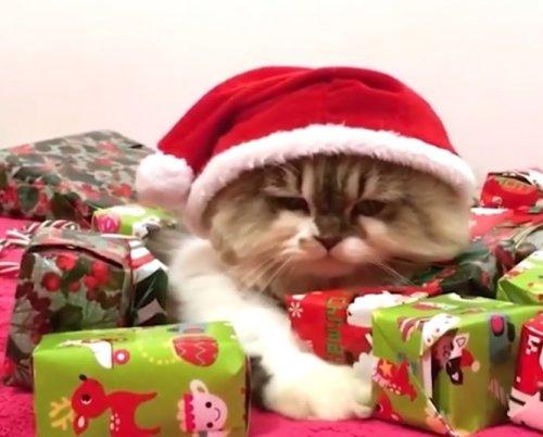 Рождественские неудачи и падения от FailArmy
