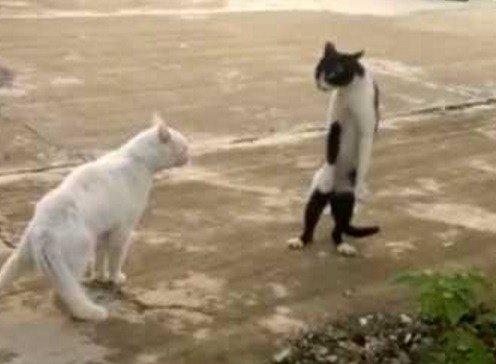 Кошки, которые танцуют, как Майкл Джексон (10 фото)