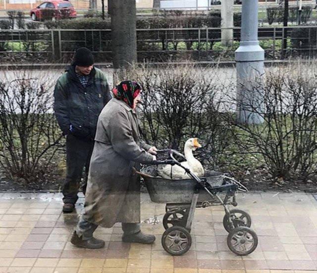 1484215520_gde-to-v-rossii-28.jpg