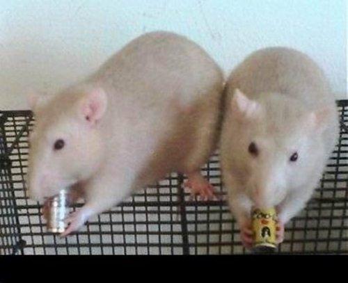Животные, которые не прочь выпить (17 фото)