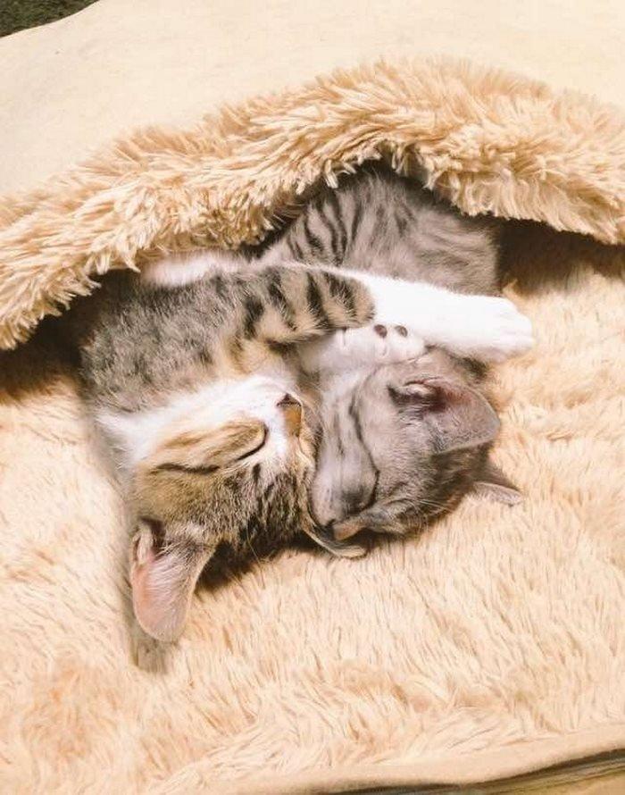 пусечки котята вдвоем обнимаются и засыпают картинки процесс похудения нужно