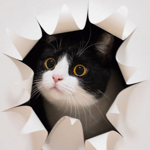 Очаровательная кошка Зоуи, которая носит сердце на груди (12 фото)