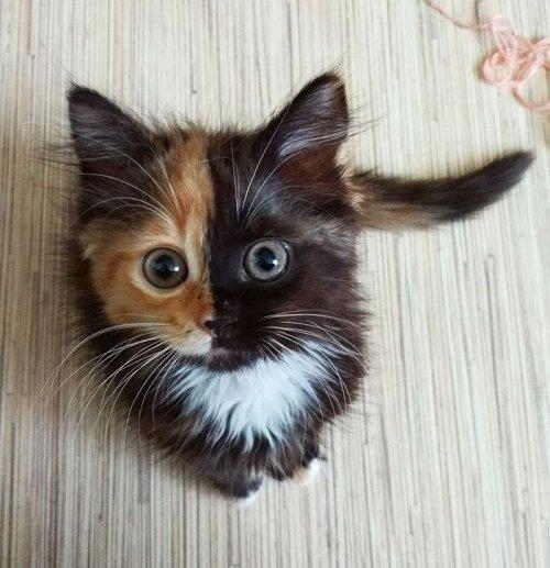 Двуликая кошка Яна (11 фото)