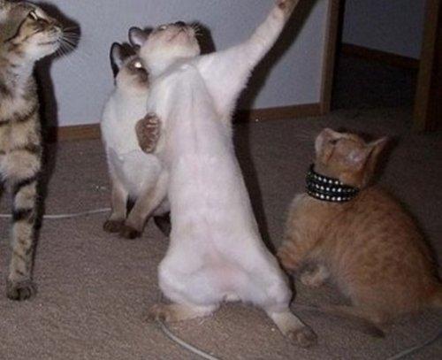 Танцующие кошки (10 фото)