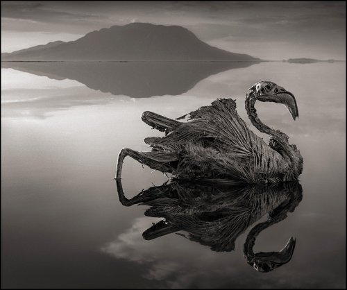 Смертоносное озеро в Африке превращает животных в камни