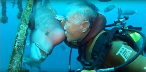 Невероятная 25-летняя дружба между аквалангистом и рыбой