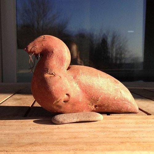 Плоды странной и забавной формы (26 фото)