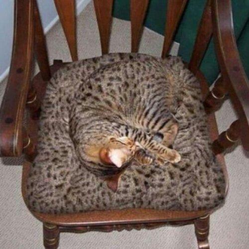 Кошки, которые знают толк в настоящей маскировке (12 фото)