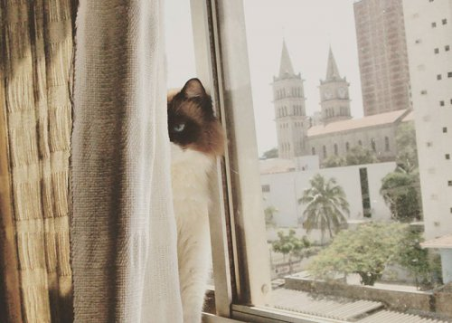 Самые недовольные кошки в мире (23 фото)