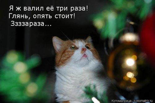 Свежая котоматрица (21 фото)