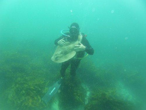 Завидев этого человека, акула каждый раз подплывает, чтобы обняться с ним (8 фото)