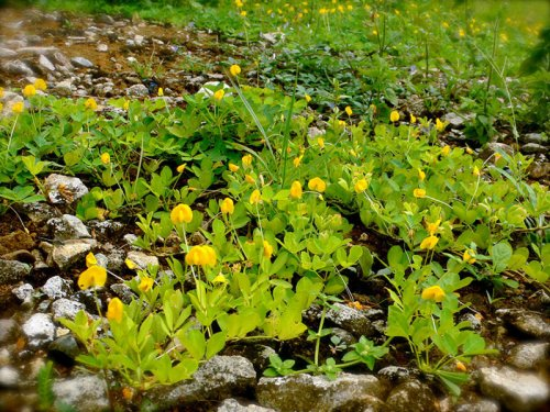 Растения, на которых растут известные нам продукты (13 фото)